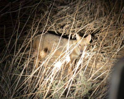ספארי לילה בעמק בית שאן